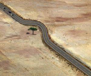Save every tree as if its the last